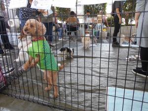東京 保健所 犬